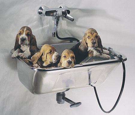 Vaskekar / Vaskerenner